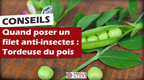 1-filet-anti-insecte-tordeuse-du-pois-papillon-maillestore
