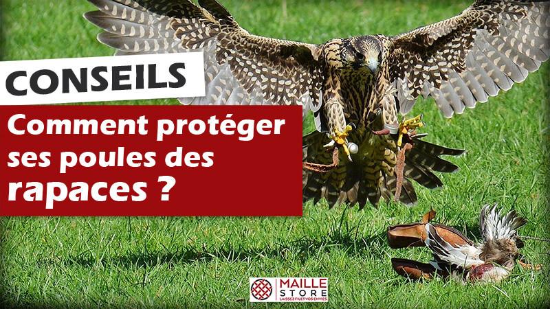 comment-proteger-poules-rapaces-filet-anti-oiseaux-maillestore.jpg