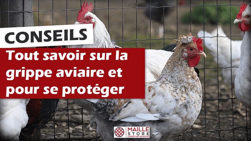 tout-savoir-sur-la-grippe-aviaire-filet-protection-oiseaux-maille-store.png